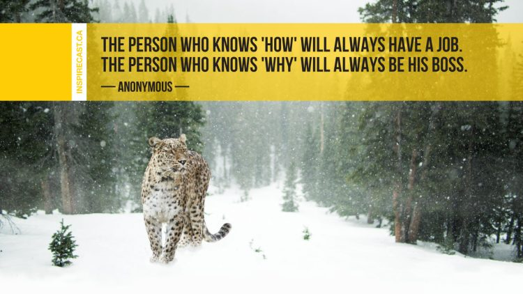 The person who knows 'how' will always have a job. The person who knows 'why' will always be his boss. ~ Anonymous